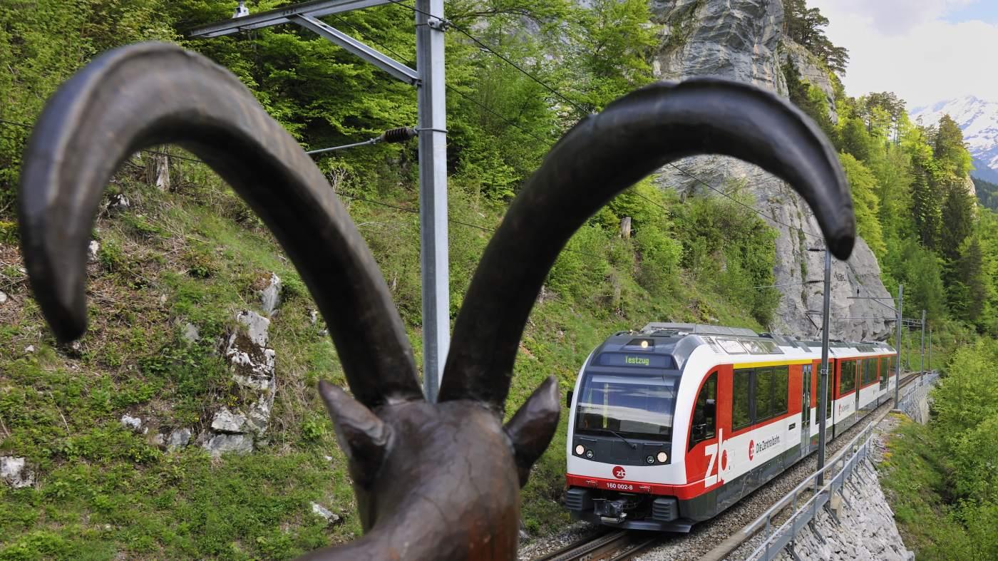 Fink im Zug