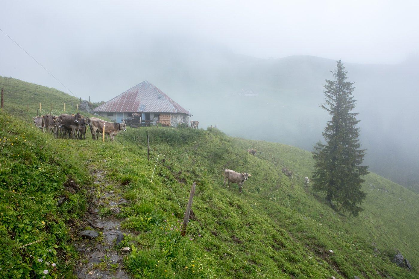 Alp im Nebel